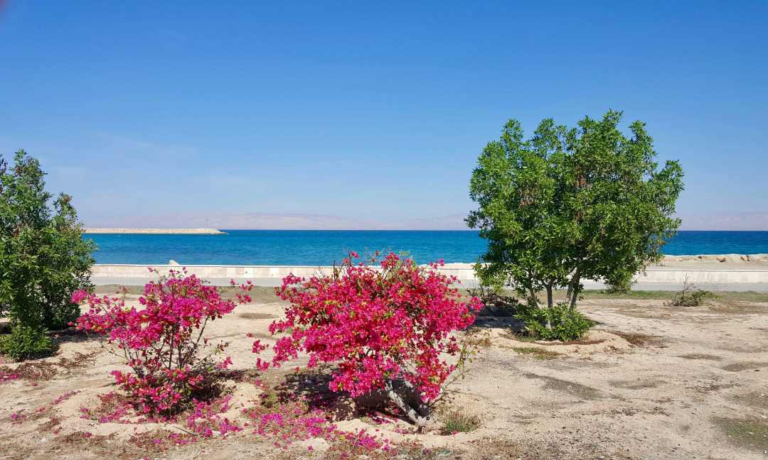 From wildlife to the underground city, discover ten things you probably didn't know about Kish, one of Iran's beautiful Persian Gulf islands.