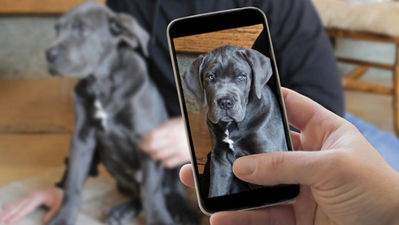 Learn to Take Better Pictures and Videos of Your Pet