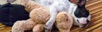 Indestructible Dog Bed Reviews | Best Indestructible Dog ...