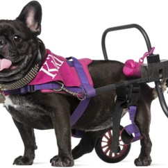 Wheel Chairs For Dogs Wheelchair Covers Best Wheelchairs Reviewed Tested 2019