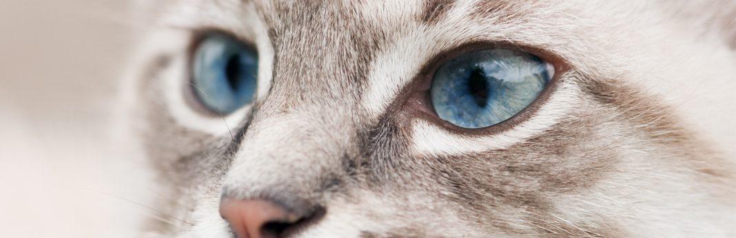 cat pupils here s