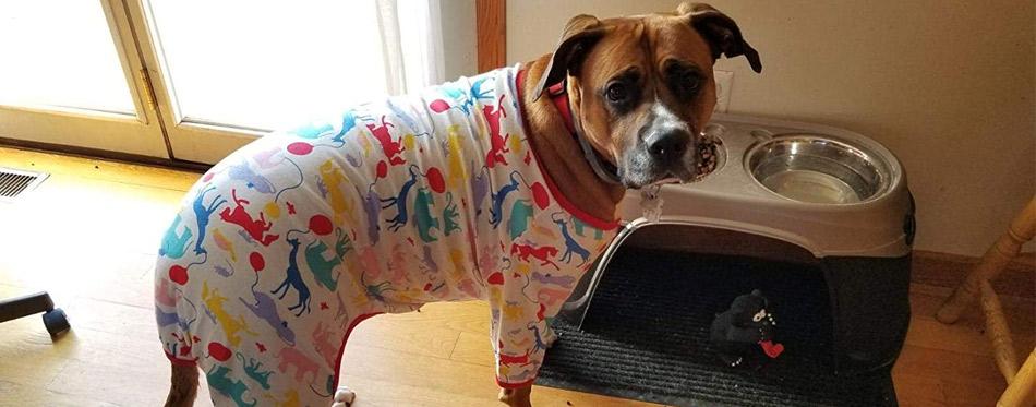 the best dog pajamas