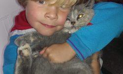 Pet Bereavement Guide - Children