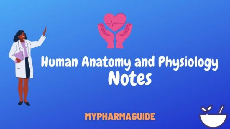 Human Anatomy and Physiology Notes Free Download