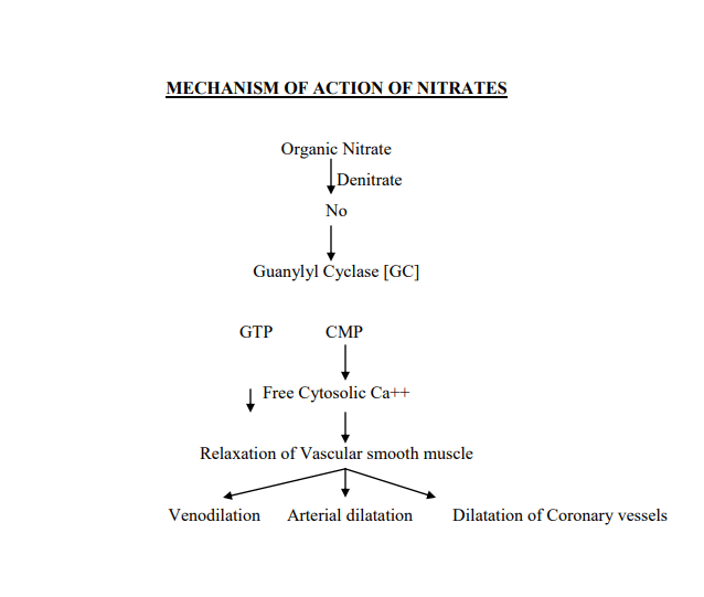 Mechanism of Action of Nitrates
