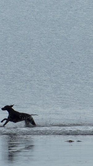 Urlaubsfoto Action Hunde