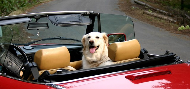 Cars for dog owners- somebody's listening!