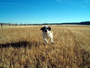 How to have the best behaved dog at the dog off-leash park Part 1