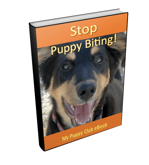 Stop puppy biting and nipping