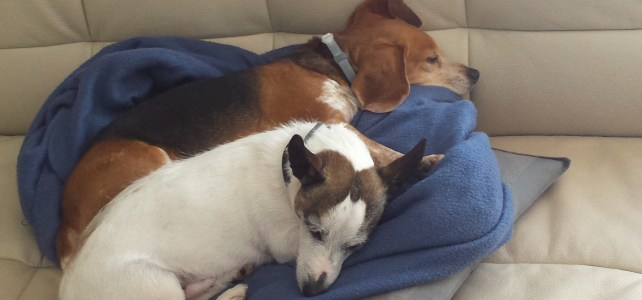 4 things I have learned from my two rescue dogs by Janet Granger