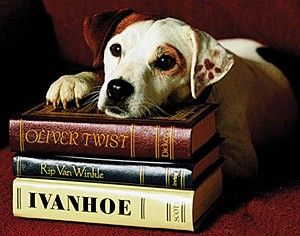 The English Language and the Word 'Dog'