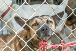 Save shelter dogs