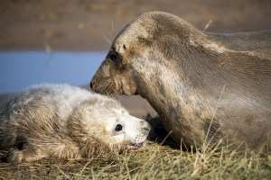 The puppy, the seal and the sea by Patricia Furstenberg