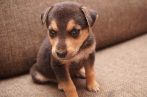 5 Tips for Raising a Confident Puppy