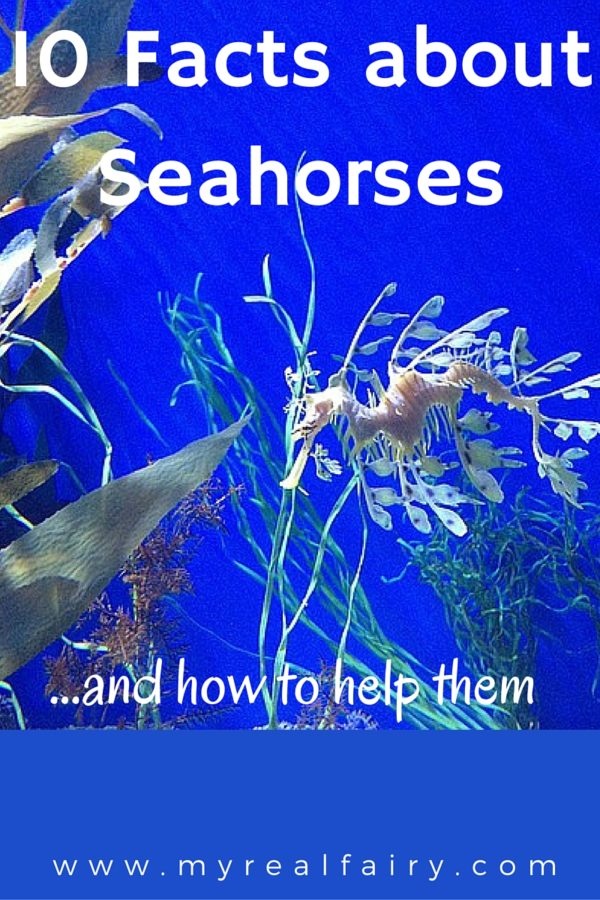 10 Facts About Seahorses ... and how to help them