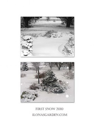 winter vignettes