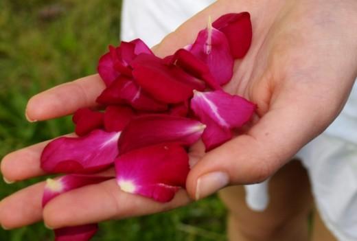Romantic Red Rose Petals