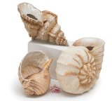 Set of 3 Seashell Planters/vase Great Floral Vase or Decorative Figurines