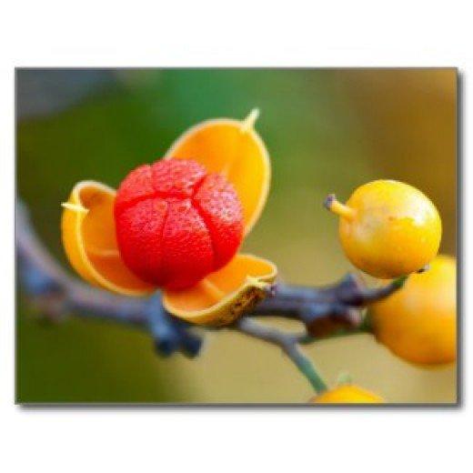 The colors of bittersweet berries ignite ideas