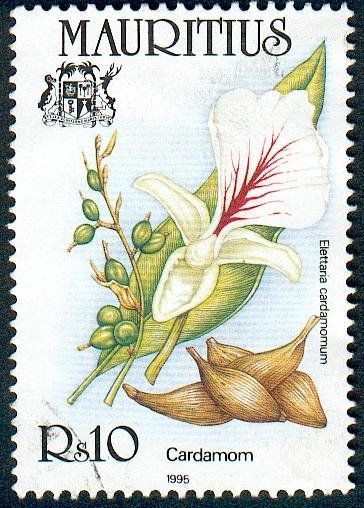 botanical stamp of cardamom plant