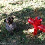 DIY Fire Hydrant