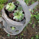 Repurposed Vintage (gas/watering) cans