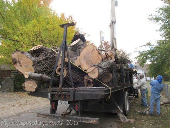 cut-down-tree