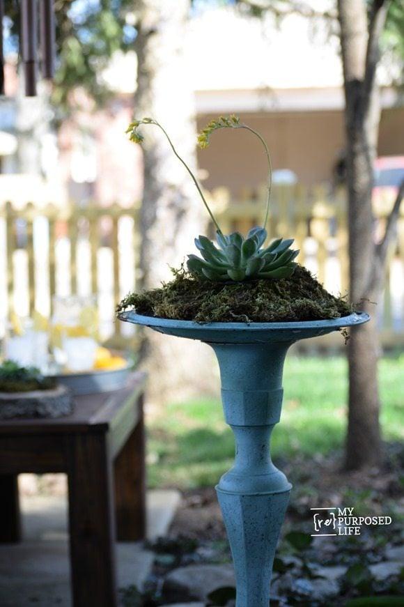 birdbath succulent planter MyRepurposedLife.com