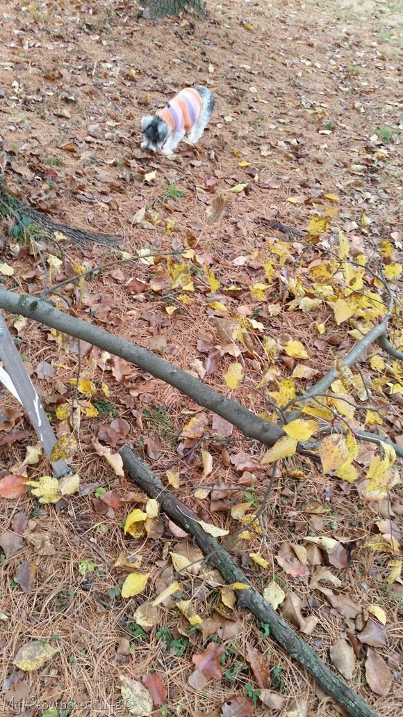 trim dead branches with sawzall