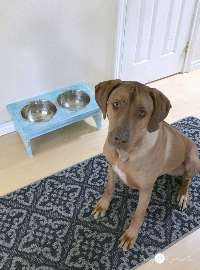Sunny sitting by her new dog bowl stand