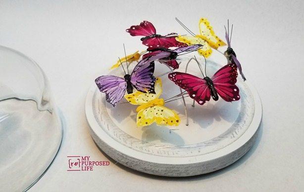 cheese cloche dome butterfly garden display MyRepurposedLife.com