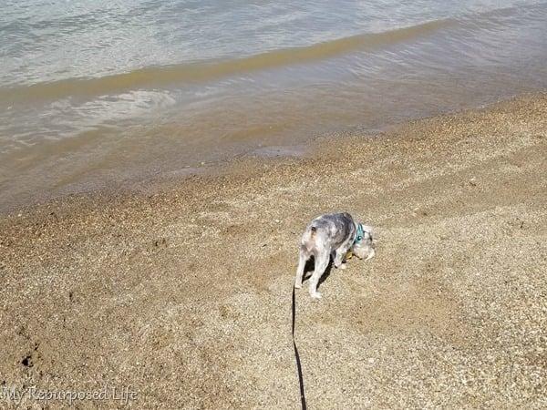 Lulu Mae on the beach