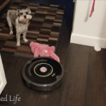 Irobot cleaning, care, maintenance of your Roomba