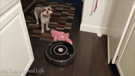 iRobot Roomba with small dog