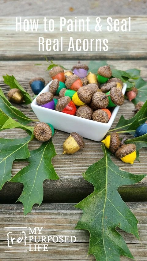 Have you ever seen painted acorns? I'm going to show you how to prep and paint acorns from your yard. Step by step details on drying, baking, painting and sealing. A great Fall decor project. #MyRepurposedLife #repurposed #acorns #fall #decor via @repurposedlife