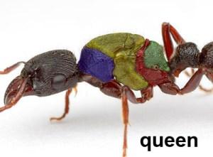 Queen Diagram