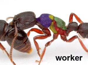 Worker Diagram