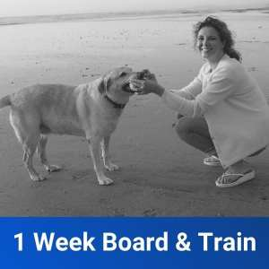 1 Week Freedom Board and Train