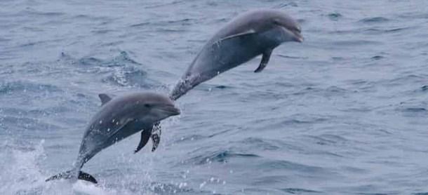 Myrtle Beach Dolphin Cruise