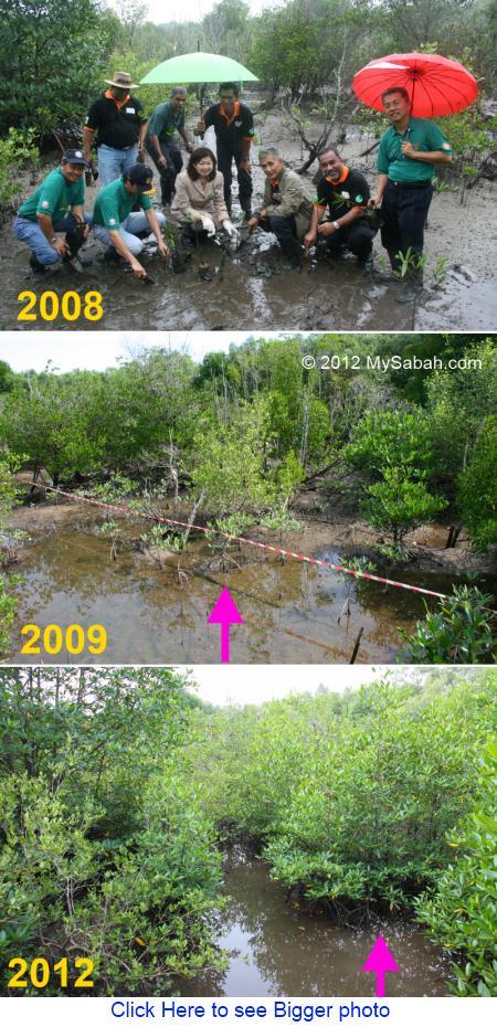 mangrove planting on World Wetlands Day