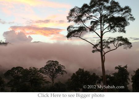 sunset of Maliau Basin forest