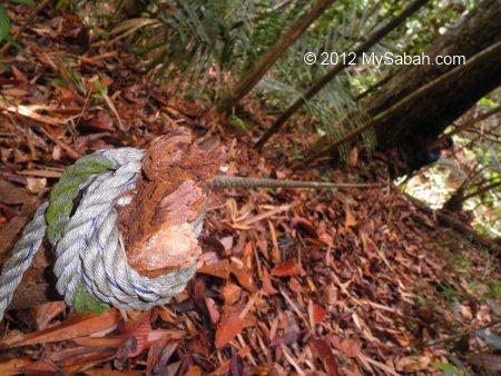 steep trail to Tawai Waterfall