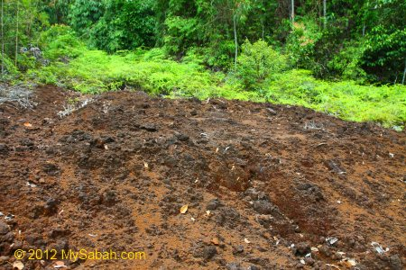 ultramafic soil of Tawai