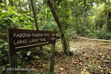 jungle trail to Pagong-Pagong Beach