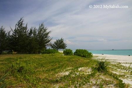 vegetation on Sands Spit Island
