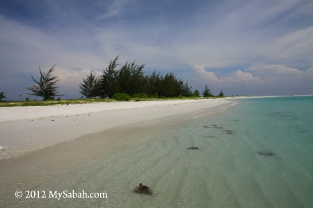 sandy beach of Pulau Kalampunian Besar