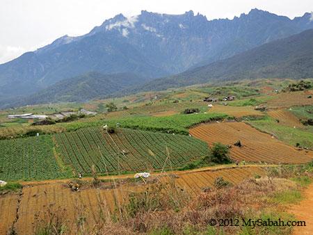 Mount Kinabalu and Kundasang farmland