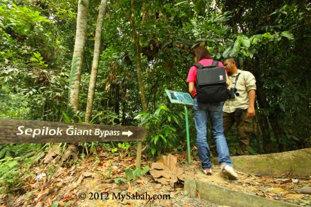 entrance to Sepilok Giant, the Oldest Tree of Sabah