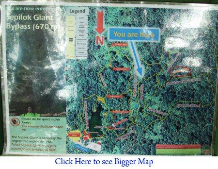 location map of Sepilok Giant