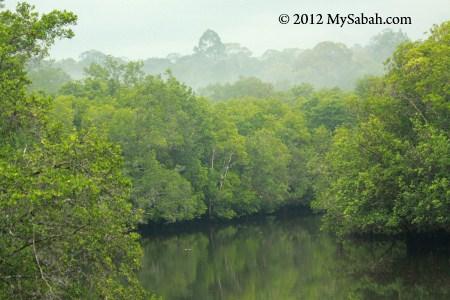 misty morning of Sepilok mangrove